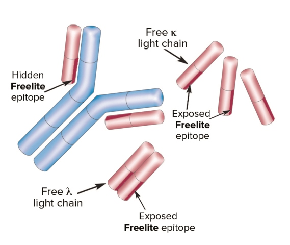 Freelite Structure